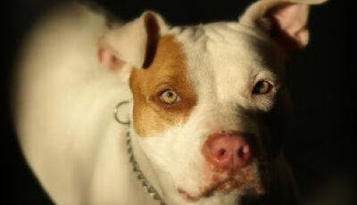 Ataque de fúria: homem tem braço dilacerado por pitbulls em MS
