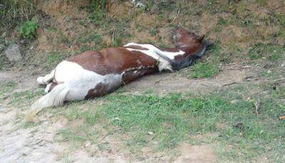 Em MS, Homem é detido por moradores após agredir cavalo com porrete