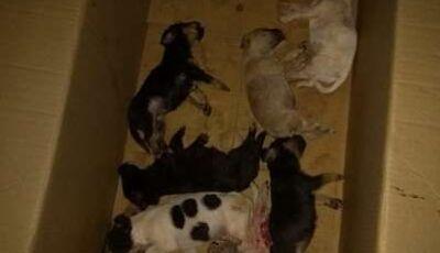 Em MS, Mulher de 51 anos é multada em R$ 8 mil por deixar cachorros morrerem de calor