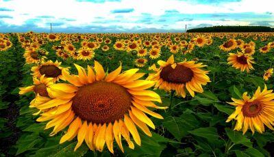 Setembro Amarelo: para Governo MS, prevenção ao suicídio acontece o ano todo