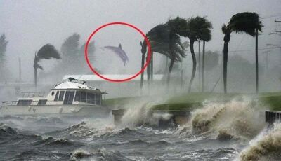 Fotógrafo registra golfinho 'voando' nas Bahamas durante passagem de furacão