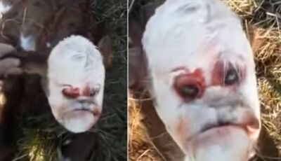 Bezerro mutante com 'face humana' choca agricultores na Argentina