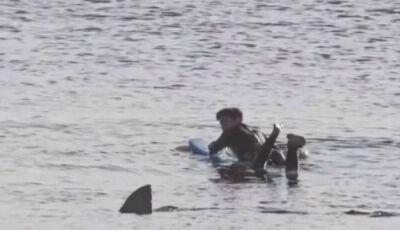 Surfista 'congela' a dois metros de tubarão branco