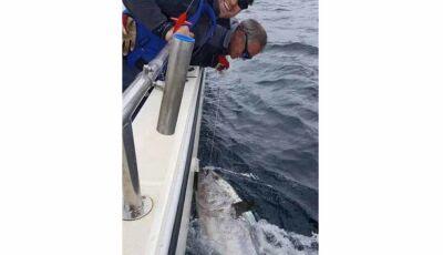 Pescadores fisgam atum azul de R$ 14 milhões, mas o devolvem ao mar