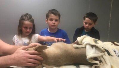 Filhote de pitbull morre ao proteger crianças de cobra venenosa