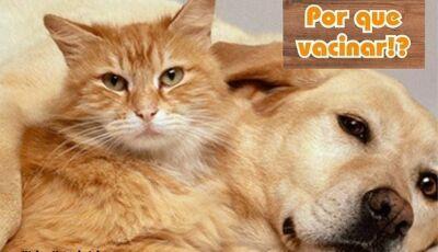 Em Fátima do Sul, Cia do Bicho destaca a importância da vacinação nos animais de estimação