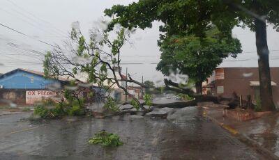 Chuva de uma hora e meia derruba 31 árvores e arrasta motociclista em MS