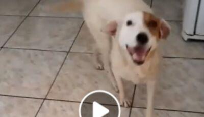 Glória de Dourados: Cadelinha que sobreviveu a incêndio passa por cirurgia e família agradece doaçõe