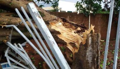 Tempestade com ventos de 131 km/h causa destruição em MS, Veja Fotos
