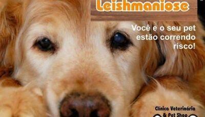 Cia do Bicho alerta, a Leishmaniose é uma doença infecciosa grave, veja principais sintomas