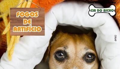 Cia do Bicho dá dicas para proteger seu Pet dos fogos durante festejo de fim de ano em Fátima do Sul