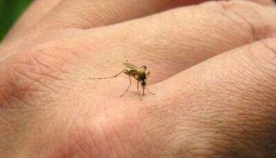 Saúde confirma quarta morte por dengue no ano e secretário teme epidemia