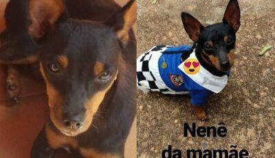 Glória de Dourados: Cãozinho morre de tristeza após sua dona viajar para Rondônia