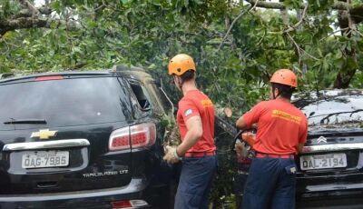 Carro que faz segurança do governador é atingido por árvore