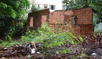 Em 15 dias, dengue matou três pessoas em Mato Grosso do Sul