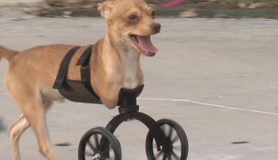 Rodas feitas em impressora 3D dão qualidade de vida para cães deficientes