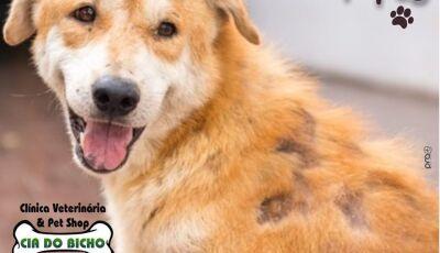 Cia do Bicho fala do tratamento adequado e seus cuidados sobre a Dermatite canina, Confira