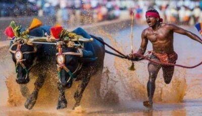 Correndo com búfalos, operário indiano 'bate recorde mundial' de Usain Bolt