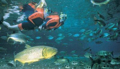 Referência nacional, Bonito tem melhor resultado no ecoturismo desde 2016