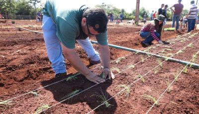 Curso de Agronomia da UNIGRAN adota sistema de rodízio de acadêmicos para cuidar dos cultivos