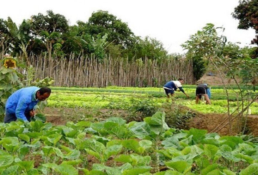 Plano voltado para a Agricultura Familiar está baseado em três pilares, assistência técnica, crédito e comercialização, explicou Verruck