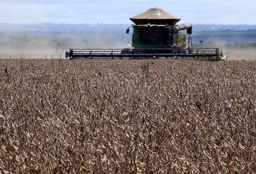 MS se destaca também na produção de milho