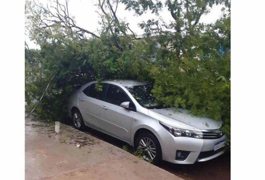 Árvore caiu em cima de veículo na Avenida XV de Novembro. Fotos: Divulgação