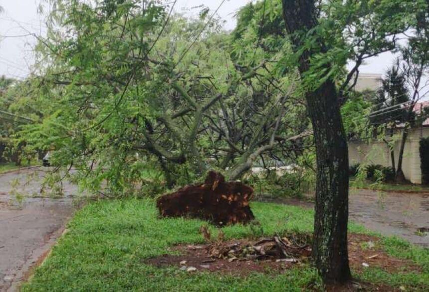 A árvore que caiu na rua Firmino Vieira de Matos rompeu parte dos cabos elétricos - Crédito: Osvaldo Duarte/Dourados News