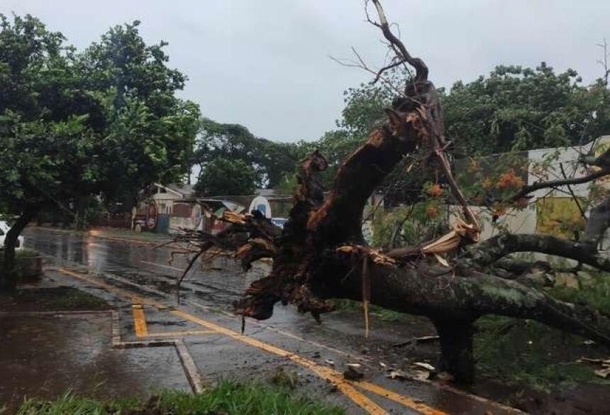 Várias árvores caíram com o temporal Foto: Divulgação