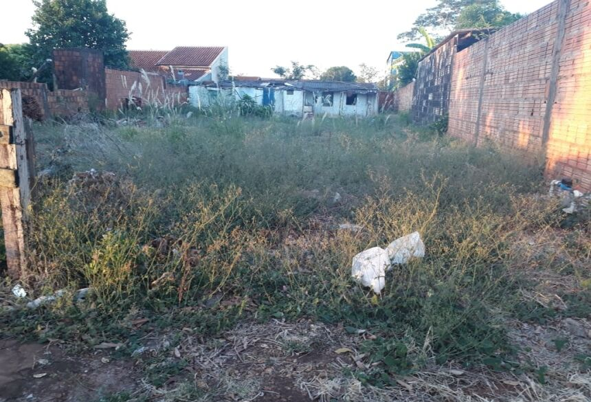 Casa abandonada na Rua Marechal Rondon está hospedando animais peçonhentos