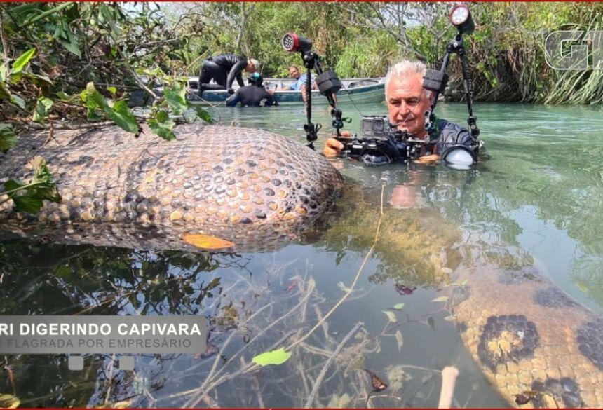 O corpo da capivara boiava sobre o rio, por causa do alimento sendo ingerido.  Foto: Juca Ygarapé/Arquivo Pessoal