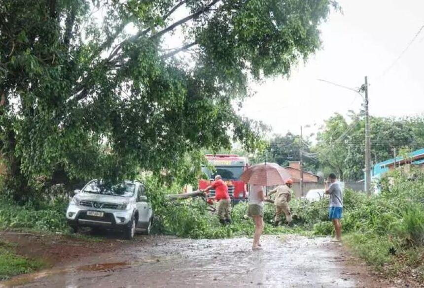 Queda de árvore fechou rua e causou danos ao carro que estava sob ela durante a chuva desta tarde (Foto: Henrique Kawaminami)