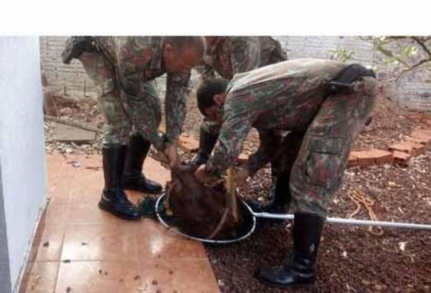 Policia ambiental resgatando a capivara
