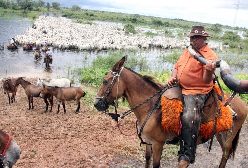 Com criação de RPPNs no Pantanal o homem e o boi estão perdendo espaço por conta de leis mal elaboradas. Foto: Sílvio de Andrade