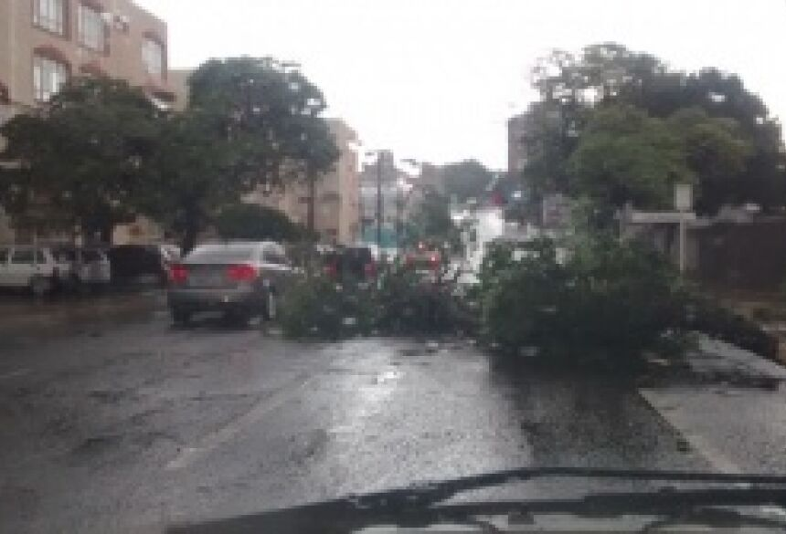 Árvore caiu na Rui Barbosa - (Foto: Fernando Ricardo)