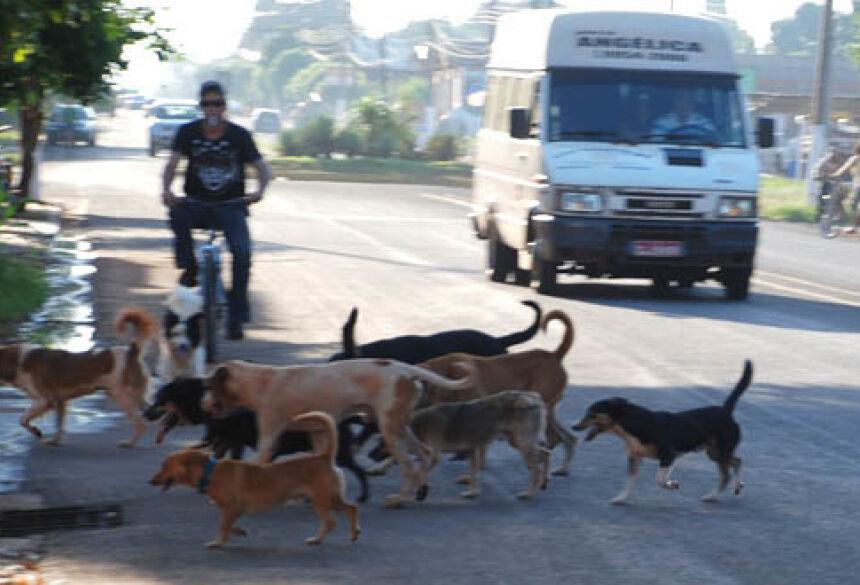 Flagra de cachorros soltos na Avenida 09 de Julho centro de Fátima do Sul. Foto: Washington Lima / Fátima News