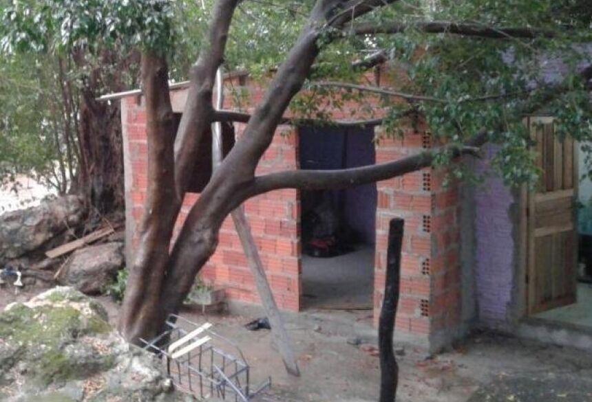 Quatro árvores caíram sobre casas nesta manhã (Foto: Divulgação/Bombeiros)