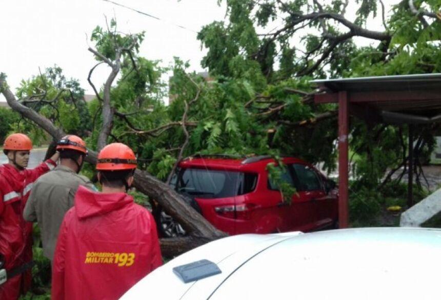 Árvore caiu sobre veículo na Marechal Deodoro. (Foto: Mayara Bueno)