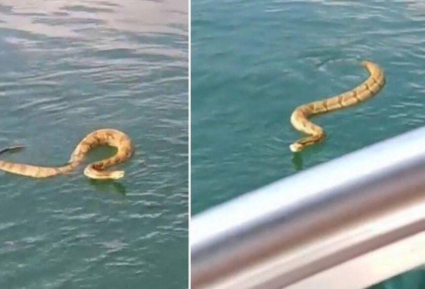 Cobra nada até barco em lago nos EUA Foto: Reprodução/Instagram(melton1wake