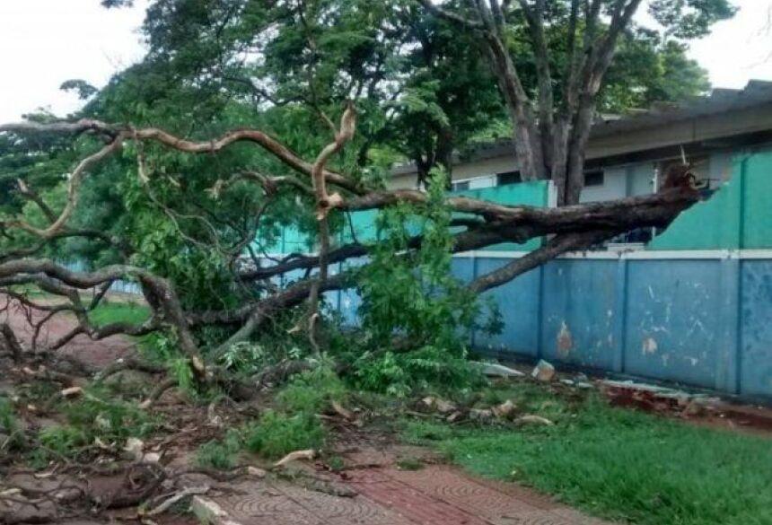 Árvore de médio porte danificou parte de muro de escola no Bairro Monte Castelo (Foto: Simão Nogueira)