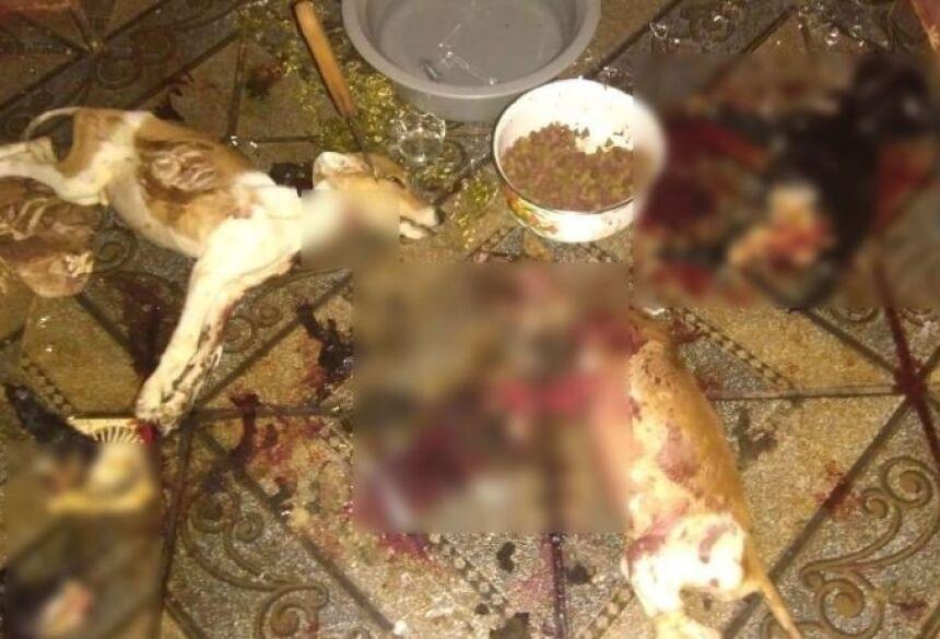 Cães sacrificados na noite de quinta-feira (10) em Rio Brilhante