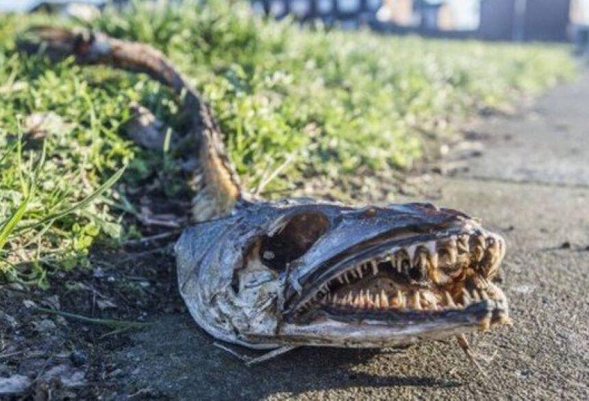riatura das profundezas dos mares achada em rua de Liverpool Foto: Reprodução/Liverpool Echo