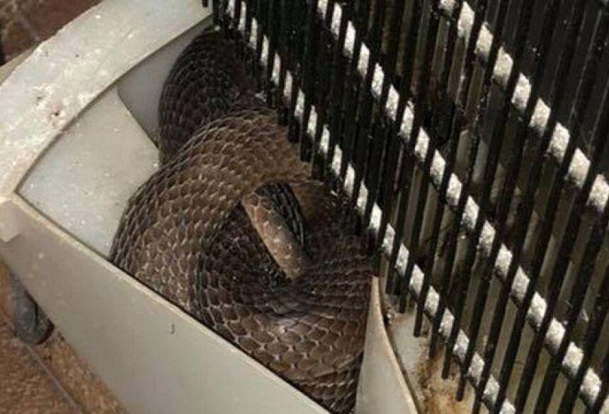 Cobra venenosa estava escondida em geladeira Foto: Facebook/Reprodução