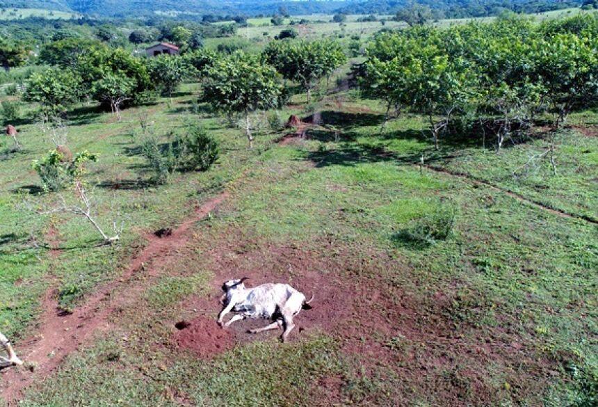 Foto: Divulgação PMA