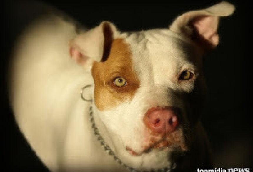 Cachorros seriam dos proprietários de uma empresa Foto: Arquivo/TopMídiaNews