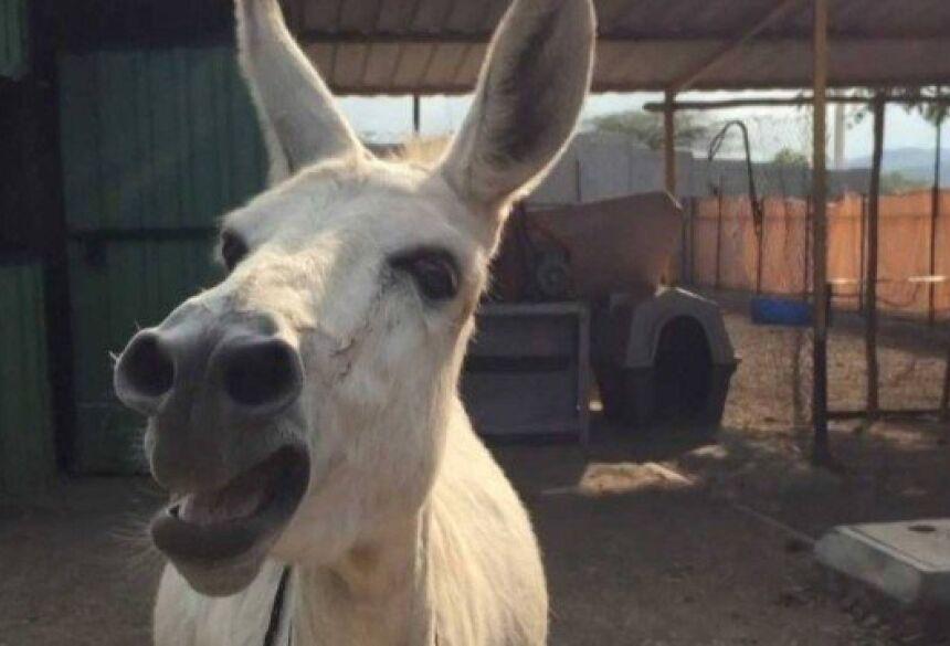 Jumenta Emily canta em abrigo para animais na Índia Foto: EXTRA