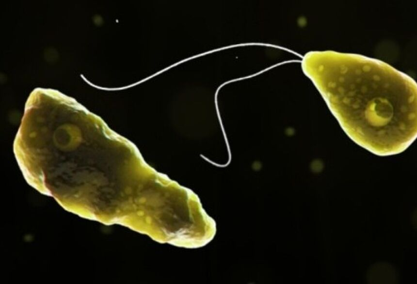 A ameba Naegleria fowleri entra pelo nariz e se instala no cérebro Wikimedia commons