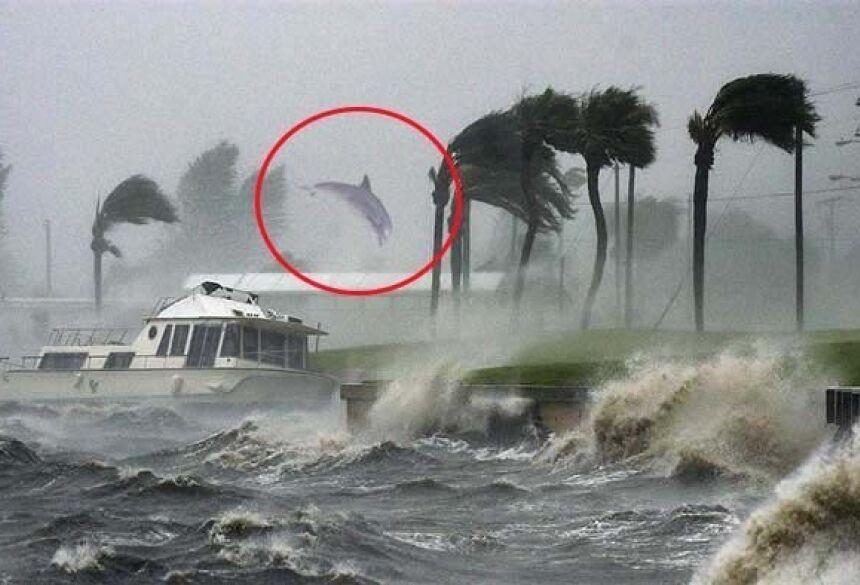 """Golfinhos foram registrados """"voando"""" após passagem do furacão Dorian nas Bahamas (Foto: Ernie Schwartz)"""
