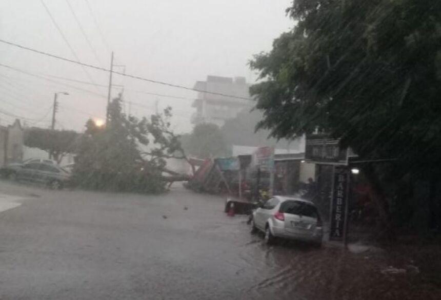 Árvore que caiu durante temporal nesta tarde em Pedro Juan Caballero - Foto: Direto das Ruas