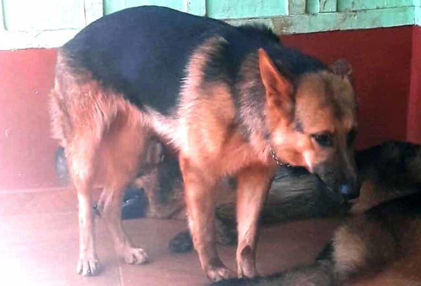Cachorra pretinha agora está com sua dona (foto Whatsap)